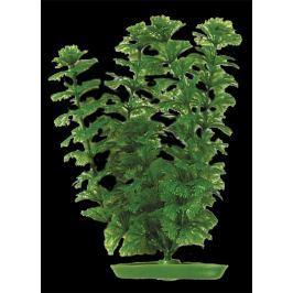 Rostlina MARINA Ambulia 30 cm