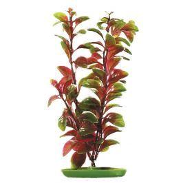 Rostlina MARINA Red Ludwigia 30 cm