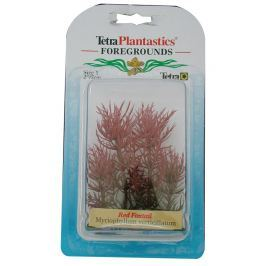 Rostlina TETRA Red Foxtail 5 cm
