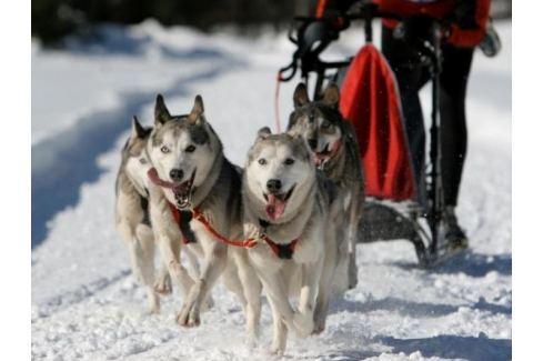 Zážitek - Mushing - jízda se psím spřežením - Olomoucký kraj Mushing