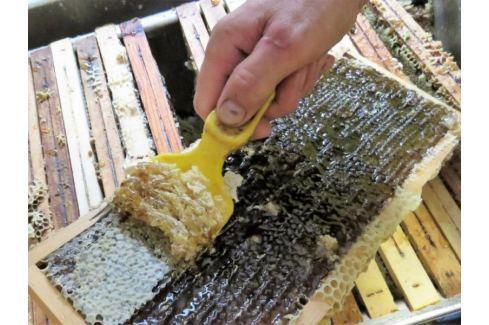 Zážitek - Vytáčení medu - Plzeňský kraj Kurzy