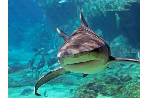 Zážitek - Potápění se žraloky - Zahraničí Potápění